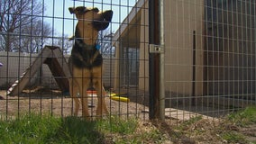 City of St. James moves to evict Watonwan County Humane Society