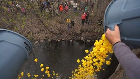 2,000 rubber ducks float downstream for inaugural race at Minnehaha Creek