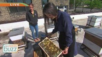 St. Paul chocolatier combines love of bees and decadent treats
