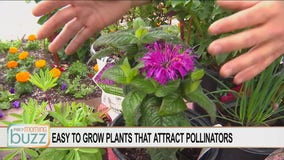 Bee Week on the Buzz: Plants to attract pollinators to your backyard
