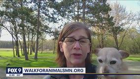 Animal Humane Society Walk for Animals kicks off this weekend