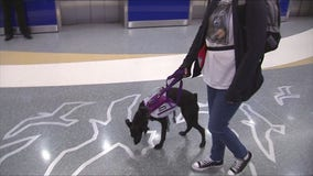Keeping your pets healthy and calm on your next trip