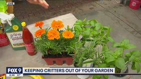 Keep the pests at bay! Protecting your garden with Dale K