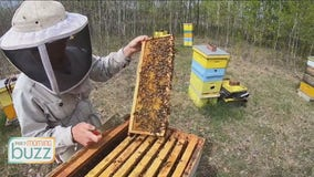 Bee Week on the Buzz: What it really takes to be a beekeeper
