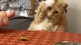 Video shows cat having weird reaction when owner spins coin