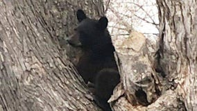 Black bear sightings reported in Ramsey County