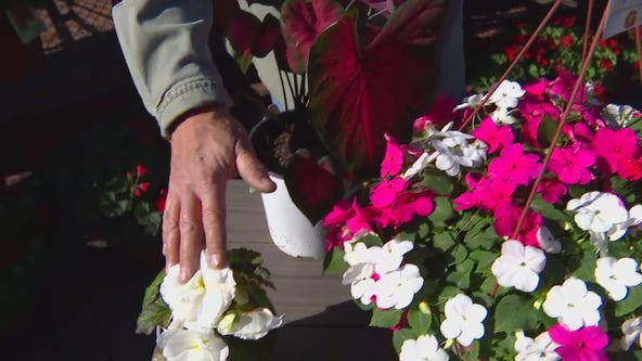 What flowers can you plant now? Dale K on protecting your plants from frost