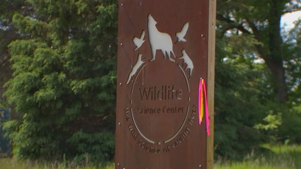 Minnesota wildlife center captures last escaped wolf after week-plus search in Anoka County