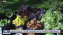 Brighten up the shady spots in your garden