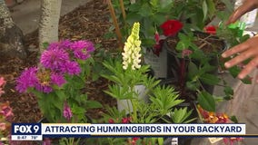 How to attract hummingbirds to your garden