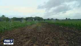 After Sunday rain, Minnesota farmers hope for more but say some damage is already done