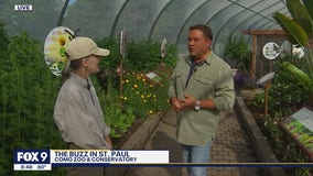Abuzz at Como - inside the new exhibit all about pollinators