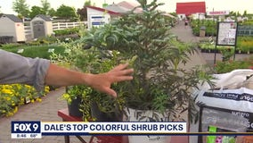 Step up your landscaping with Garden Guy Dale K's top picks for shrubs