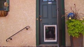Attorney's office declines to prosecute doggy door break-in, but reconsiders