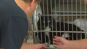 Shelter sees more 'Forget-Me-Not' animals as pandemic changes adoption process