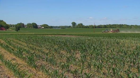 Minnesota farmers desperate for rain amid drought