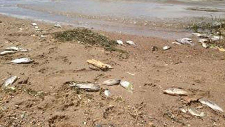 Fish-die-off