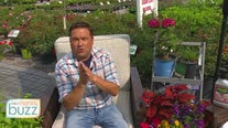 Ask the Gardener! Dale K answers some of your top summer gardening questions