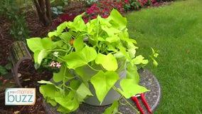 Ask the Gardener: Tips for your garden