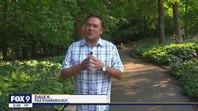 Escaping the heat at the Minnesota Landscape Arboretum
