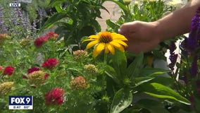 """How to add a """"wow factor' in your home with summer perennials"""