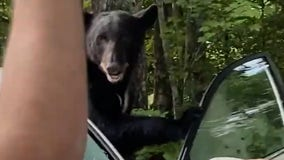 'Go! Go!': Tennessee man scares away black bear trapped in his car