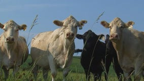 Walz asks USDA to allow emergency grazing on CRP lands to help farmers amid drought