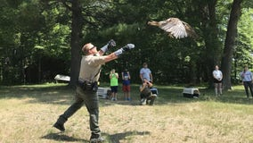 Video: 3 rehabilitated bald eagles released back into wild