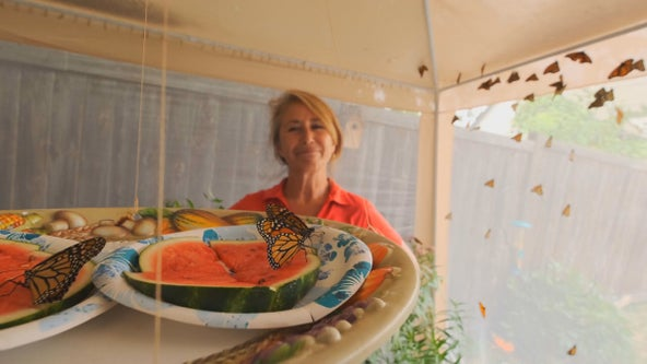 Minneapolis woman helping save Monarch population with her own butterfly garden