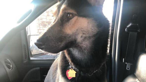 Car with dog inside stolen in St. Paul Saturday