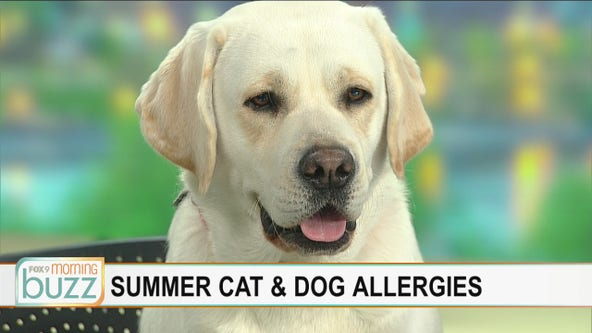 Butter (and Dr. Eric Ruhland) answer your pet allergy questions
