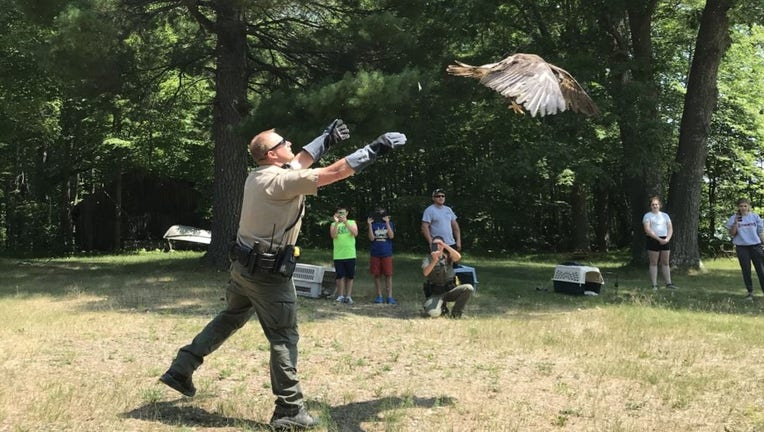 eagle release DNR