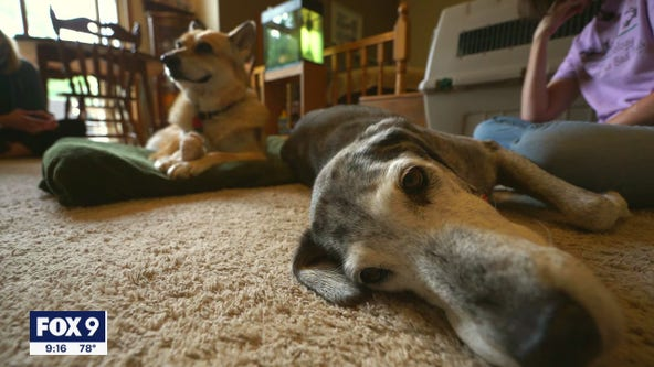 Two elderly dogs ages 15 and 20 become unexpected friends