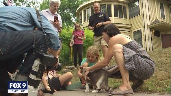 Cat tour of Minneapolis neighborhood draws hundreds