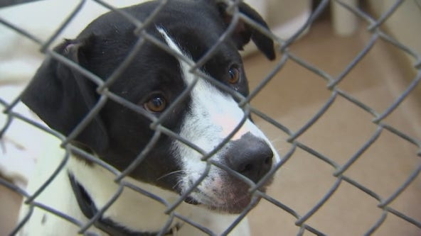 Animal Humane Society reopens programs and services to public