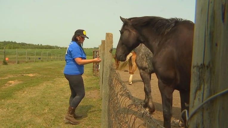 horse farm in Webster, Minnesota