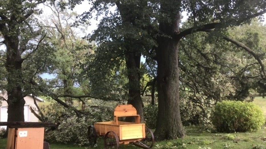 Downed trees in Freeport, Minnesota.