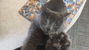 Community searches for beloved care home cat who went missing in Buffalo, Minn.