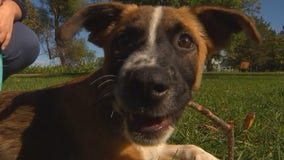 Minnesota animal rescue group sees decline in adoption requests