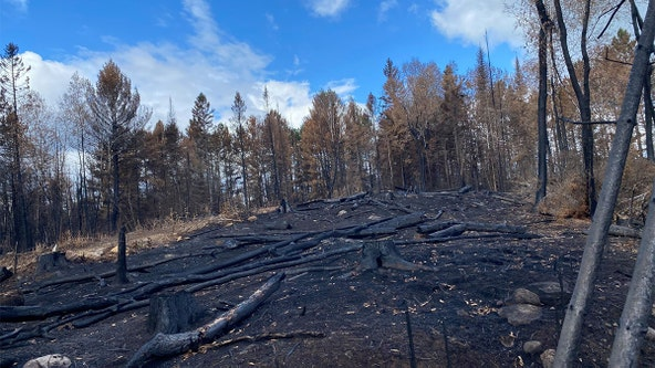 Greenwood Fire closure areas reopen, remaining burning restrictions in NW Minnesota lifted