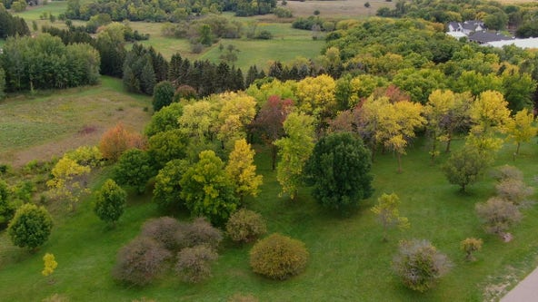 This summer's drought could mean shortened, muted fall color season