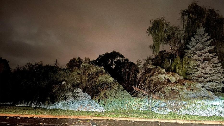 Trees down in Eagan, Minnesota
