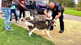 Good Samaritans save dogs from house fire in Cottage Grove