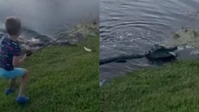 WATCH: Alligator rushes out of water, steals Florida boy's fish and pole