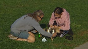 Minnesota teen expands effort to build wheelchairs for disabled animals