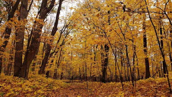 Most of Minnesota is now 'past peak' for fall foliage, DNR says