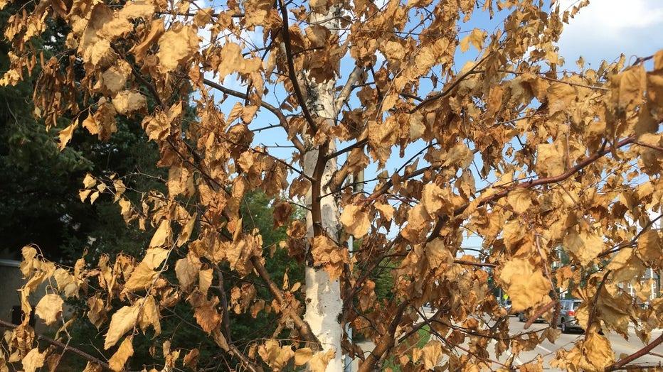 Tree image drought