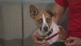 Fireworks safety tips for pets: Collar & ID tags, muffle sound, use treats and more