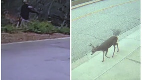 Man to face charges for shooting deer with bow and arrow in Monrovia neighborhood