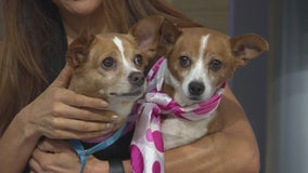 Pet Project: Ursula and Uma at Karma Rescue